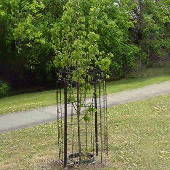 Tree-Guard-2
